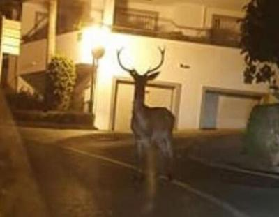 Wildlife still visits urban areas of the Costa del Sol